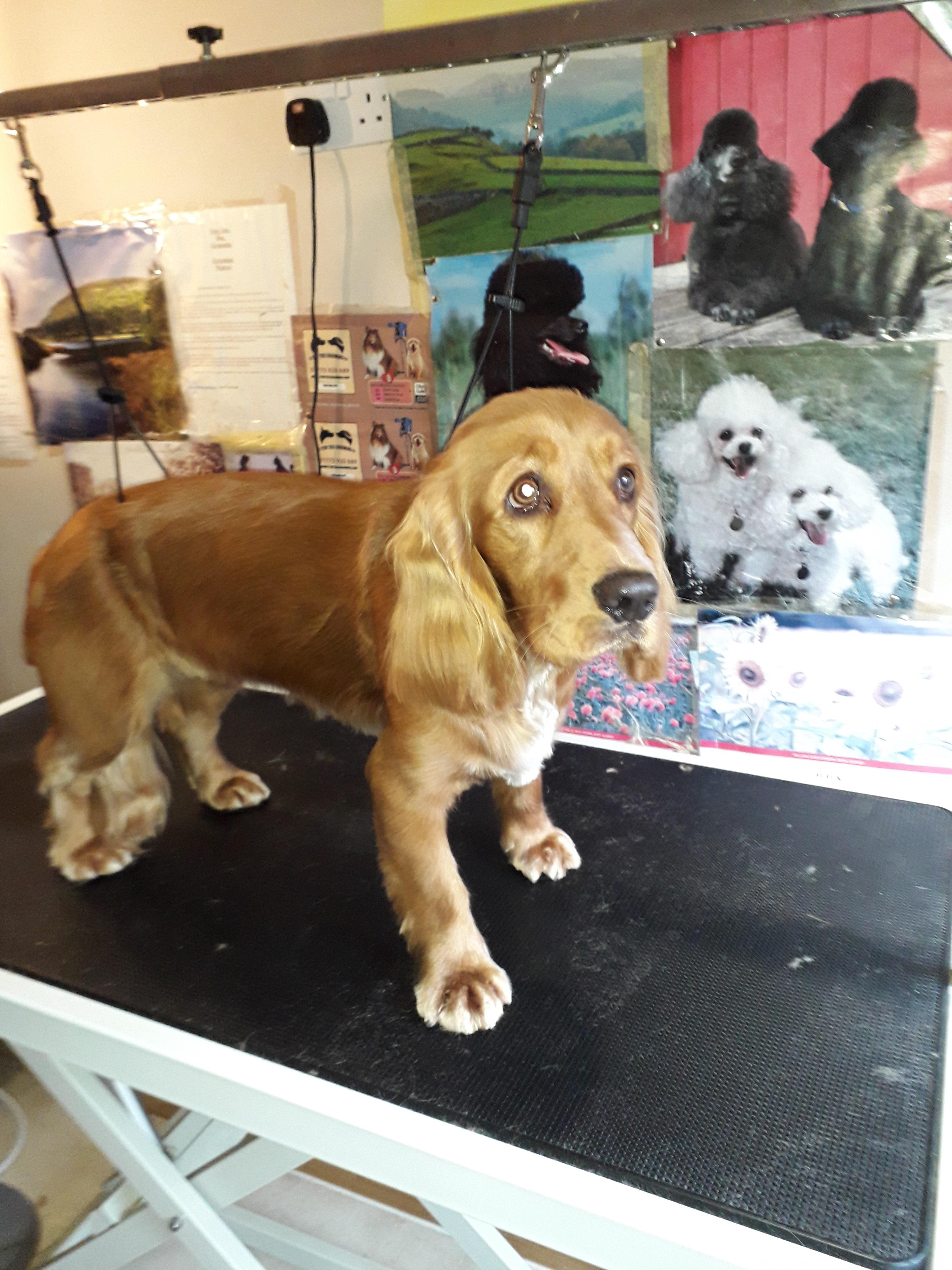 burnage dog groomers