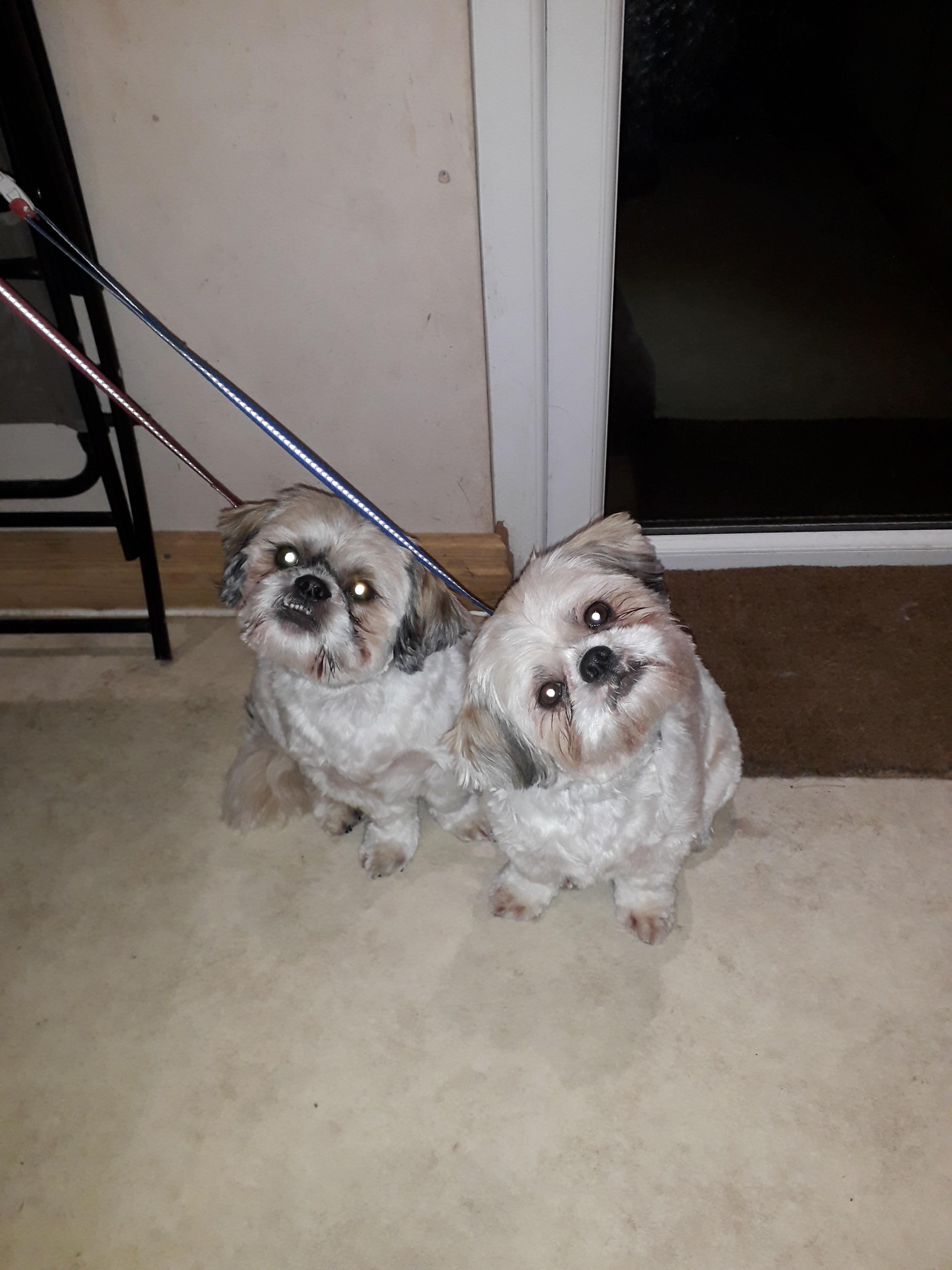 dog groomers in didsbury