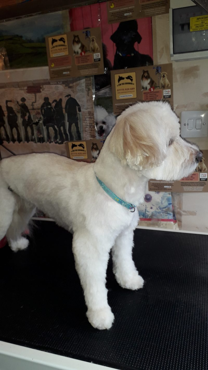 A Professional And Friendly Dog Grooming Service Covering Manchester including these areas: Fallowfield, Chorlton, Didsbury, Withington, Levenshulme or Burnage